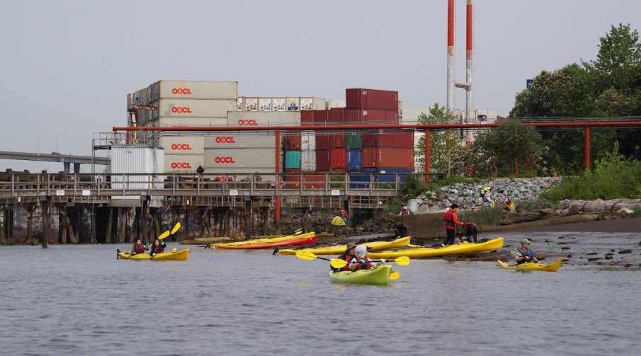 Kayakers cleaning the shoreline at Duwamish Alive.