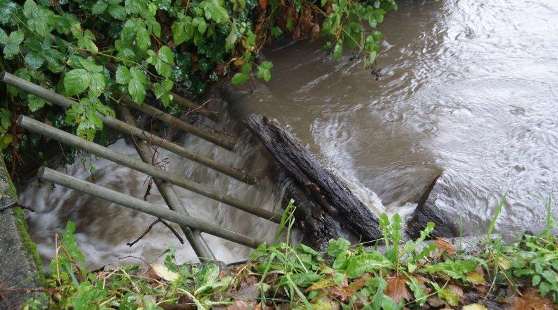 A culvert that salmon must jump through in order to enter Longfellow Creek.