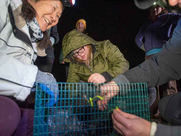 Volunteers retrieve mussel cages along Arroyo Beach in the early hours before dawn.