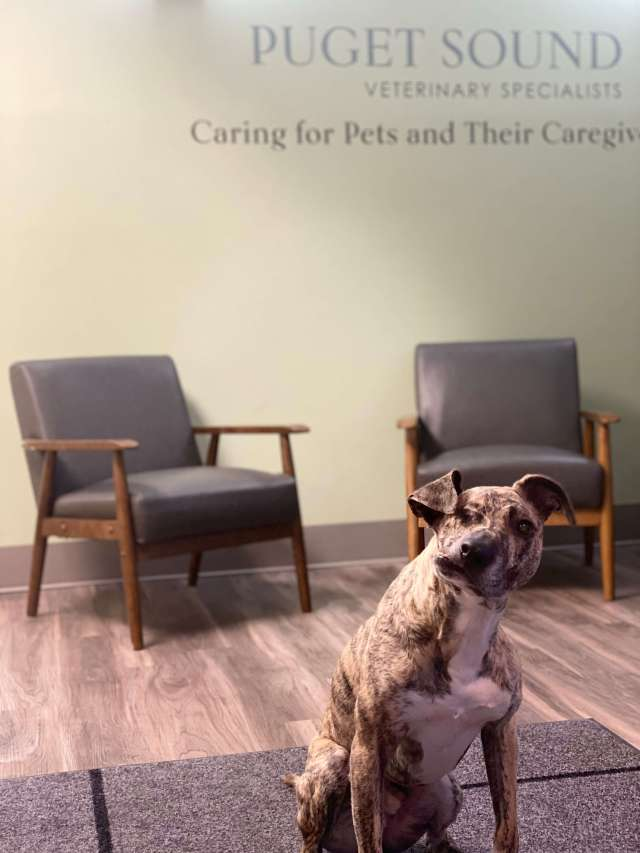 Squish - Senior Pawspitality Administrator - Puget Sound Veterinary Specialists