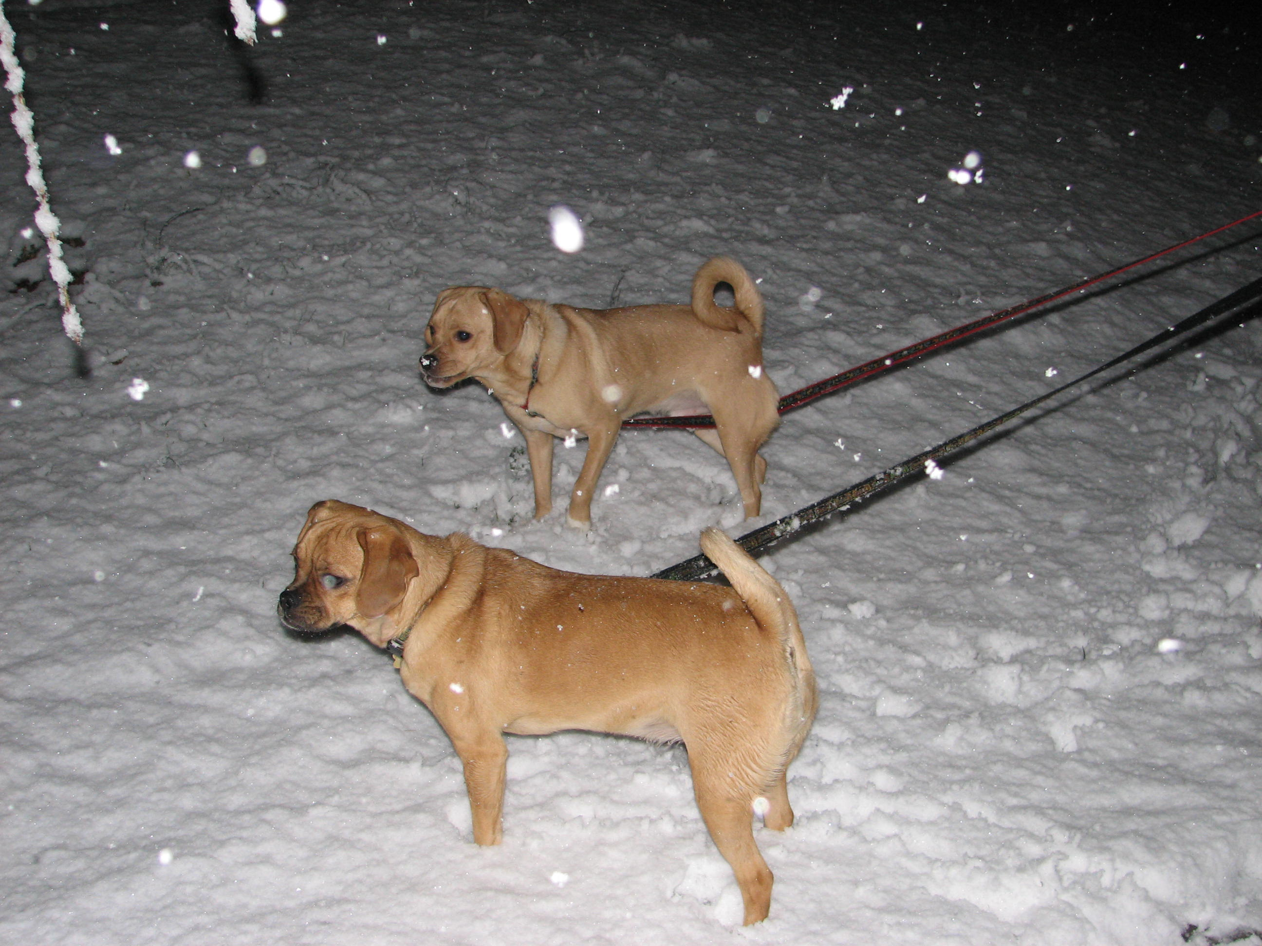 Ella and Jack in the snow