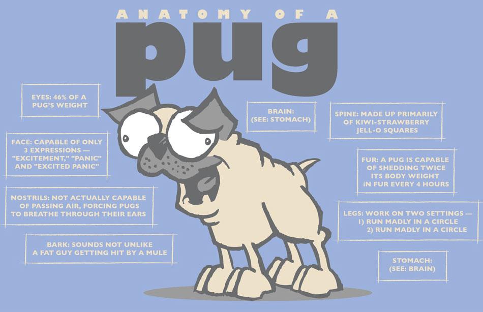 Pug Humor Pugminded