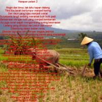 Harapan petani