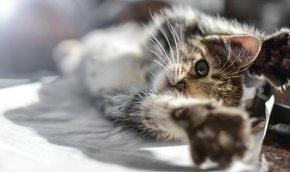 kitten-2523792__340