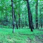 Bosque de USA frondoso de árboles verdes y césped