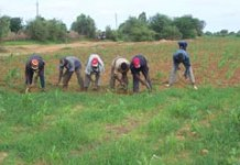 agriculteurs-soninke.jpg