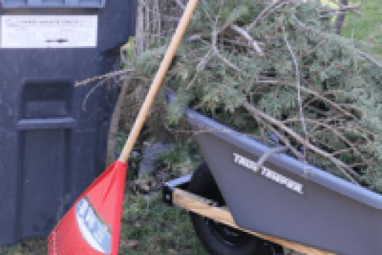 yard waste bin and wheelbarrow with branches