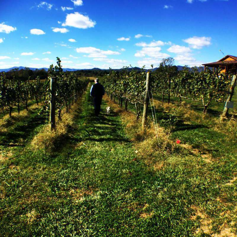 dog-friendly-vineyard