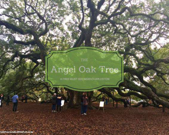 Angel Oak Tree near Charleston - PullOverandLetMeOut