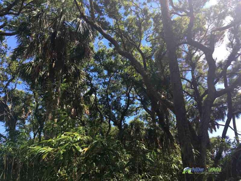 Kiawah Island Palm Trees PullOverandLetMeOut