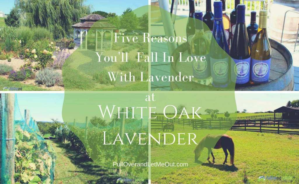 White Oak Lavender Farm PullOverandLetMeOut
