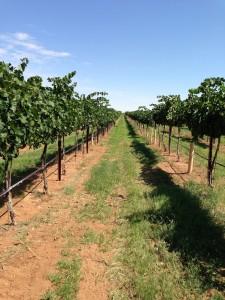 Vineyards LDV4