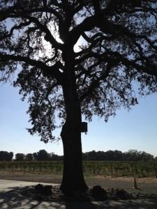 The Heritage Oak