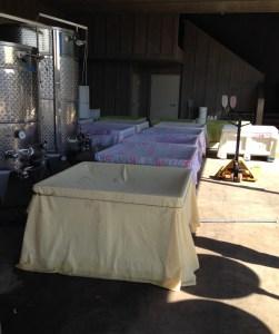 Macrobins of fermenting grapes