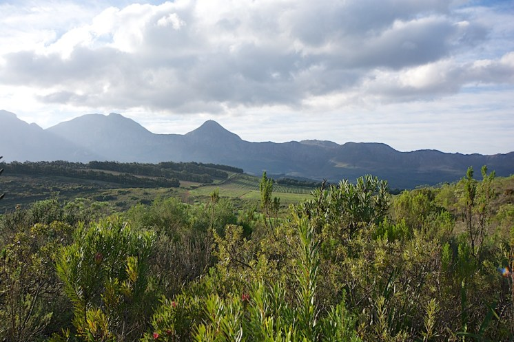 Fynbos with vineyards beyond