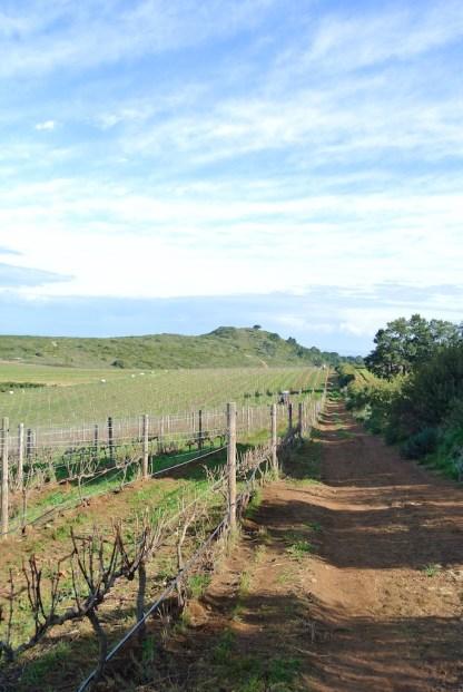 Vineyard view at Waterkloof