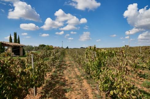 VineyardRows