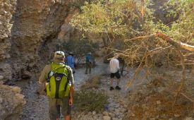 Descending into the canyon