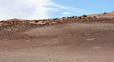 Fairy circles in the Namib Desert