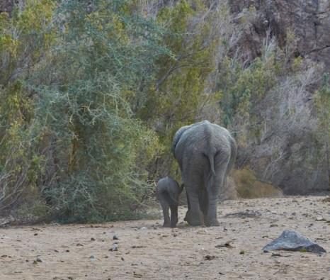Elephants leaving
