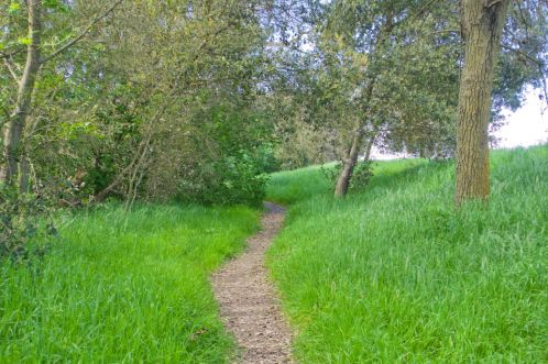 Heritage Oak path in March