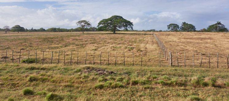 Pasture land in Cuba 1