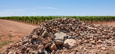 Stones from vineyard development