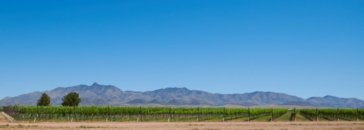 Chiricahua Ranch Vineyards and Dos Cabezas Mountains