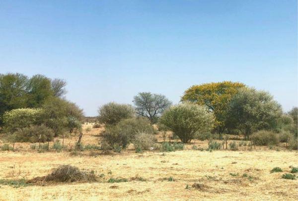 The Namibian desert in bloom