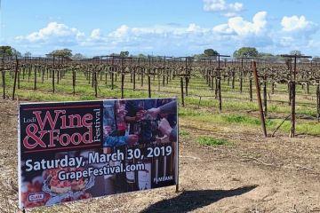 Lodi Wine & Food Festival photo