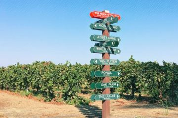 Lodi Winery Sign featured photo