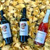 Domaine Bousquet fall featured photo