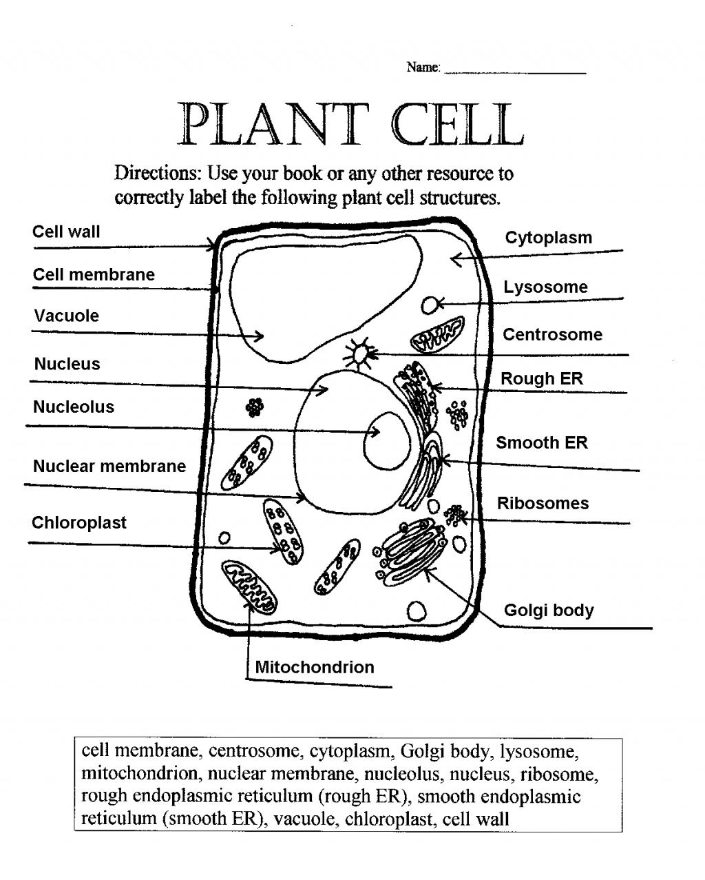 5 Label Plant Cell Worksheet Biological Science Picture