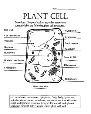 label plant cell worksheet 1 : Biological Science Picture