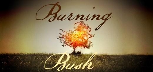 burning bush_wide_t