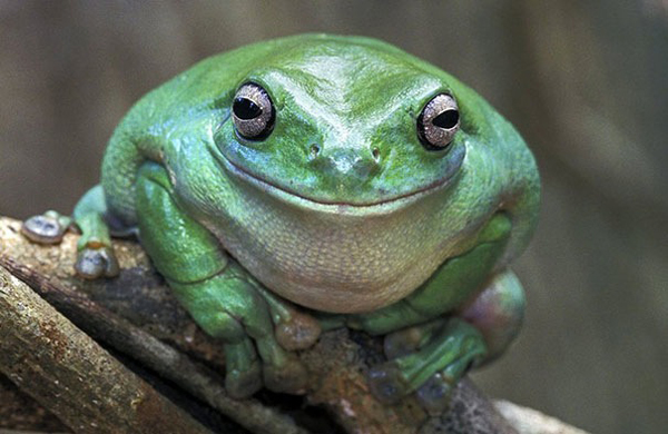 This froggy has a happy secret.