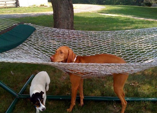 funny-cats-dogs-stuck-furniture-9