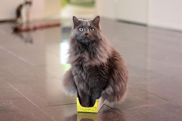 funny-cats-if-it-fits-i-sits-14