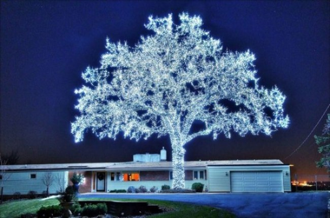13. A tree decorated with 40,000 LED lights.