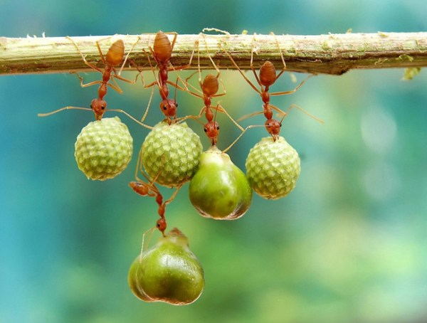 2. Ants holding on to their bounty.
