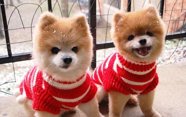 cute-animals-twins-11