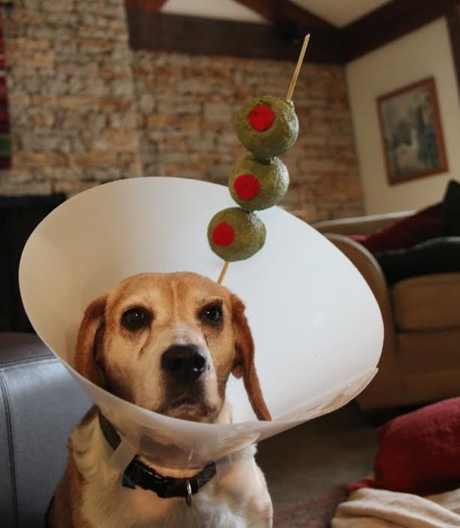 22 pets who got the best cone of shame makeovers ever