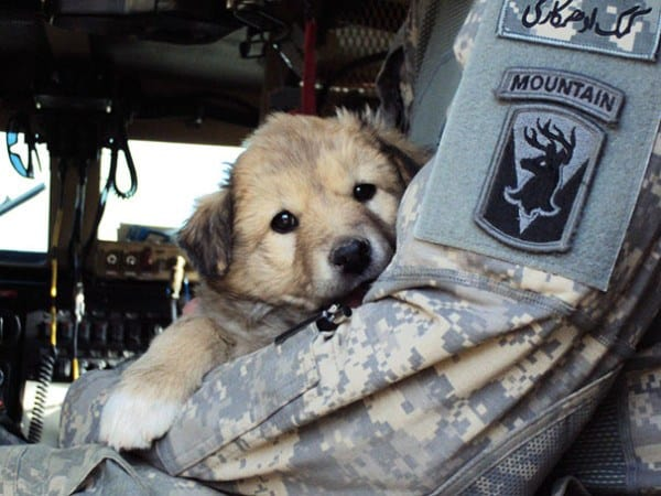 Simple Soldier Army Adorable Dog - 552f9afaa1596  Pic_821124  .jpg?w\u003d662