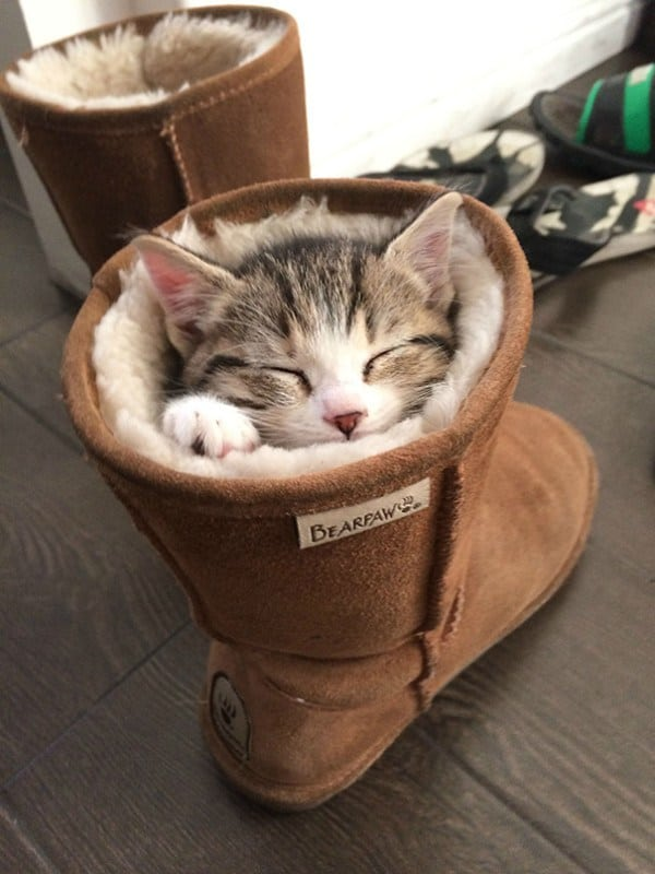 17 Super Cute Sleeping Kittens That Will Make You Want To
