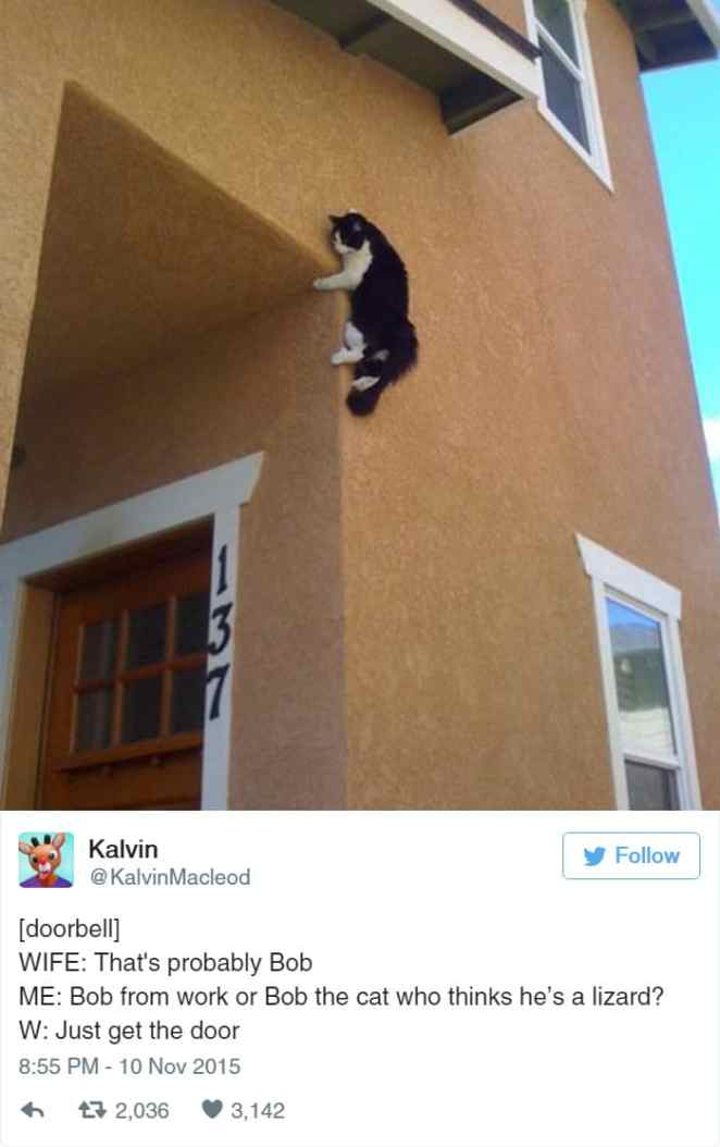 Hilarious Tweets That Only Cat People Will Understand - 16 funniest cat tweets 2016