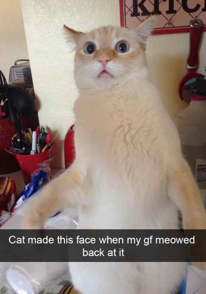 Hilarious Snapchats That All Cats Owners Can Relate To - 16 hilarious snapchats people worse day