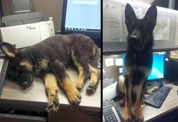 Just 19 Pictures Of Grown-Up Puppies That Will Make Your Heart Smile sub buzz 10955 1484952723 1