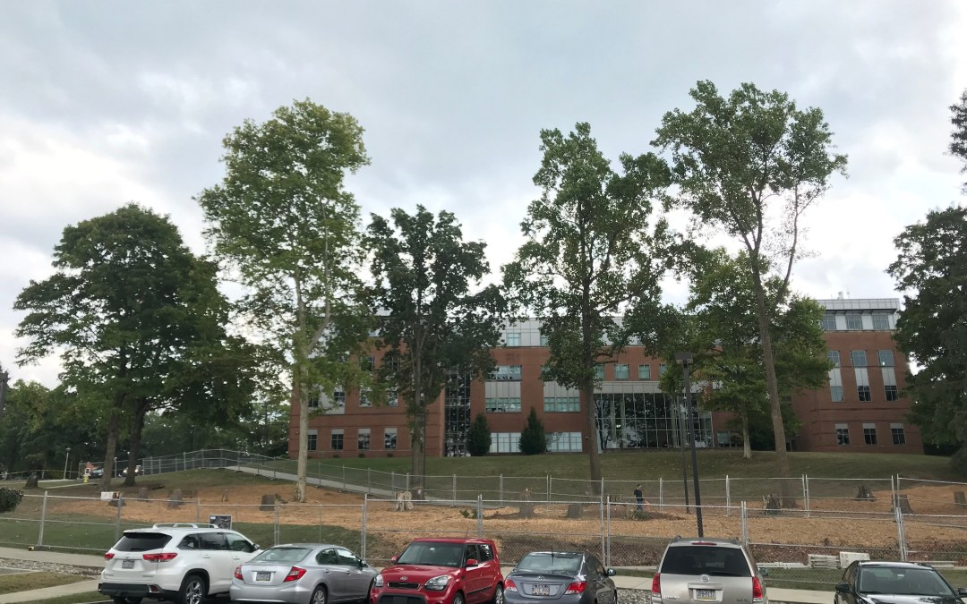 As Construction Starts, Trees Come Down, Sustainability is Considered