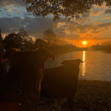 Two dogs staring at a sunrise over a lake in Orlando, Florida.