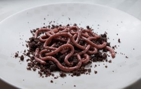 #2 Raspberry Jello Worms On A Bed Of Chocolate Doughnut Crumbs